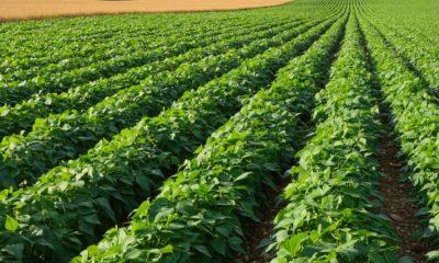 """""""Debemos producir más y con mayor calidad, para mejorar la renta agraria vía productividad y precio diferencial"""""""